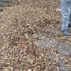 """La """"foto del giorno"""": gli effetti della """"non pulizia"""" all'esterno del Parco Bosco"""