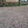 """La """"sceneggiata"""" della pulizia del Parco Bosco e i """"monumenti"""" alla """"formidabile"""" giornata"""