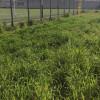 """La """"foto del giorno"""": il """"tracimante"""" verde del campo sportivo"""