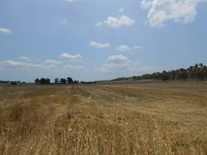 I fertili terreni dell'antico bacino del lago Sombrino