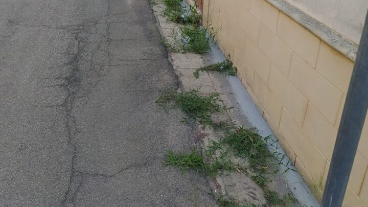 """La """"foto del giorno"""": via Giardino è un… giardino!"""