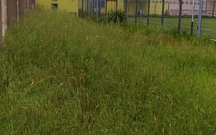 """La """"foto del giorno"""": campo sportivo, il """"grande prato verde"""""""