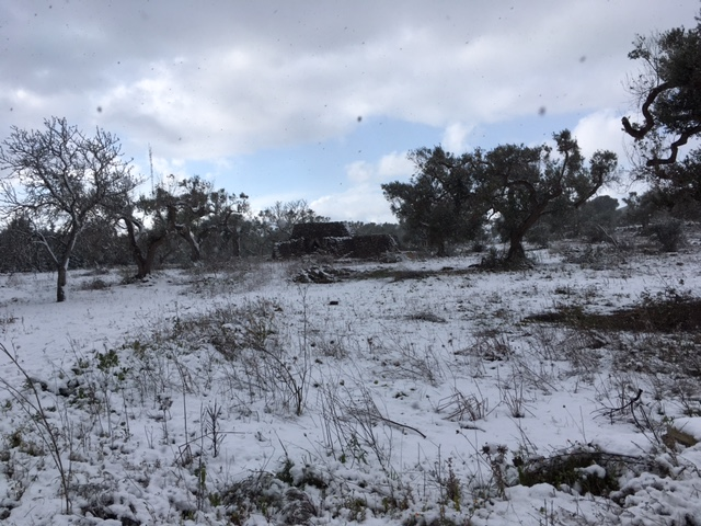 Neve sulla collina di Sant'Eleuterio